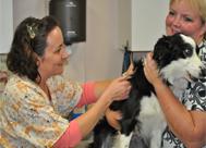 animal surgery hudson