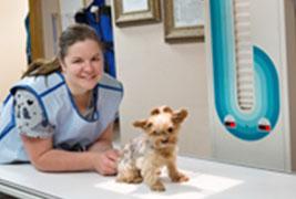 animal diagnosing and treating hudson